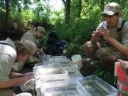 The team sorting fish
